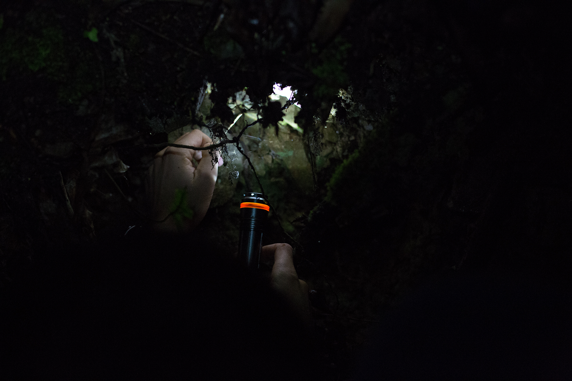 Nikki is pointing to the little strings produced by the glow worms in side this bank. When all torches were switched off we saw pretty little blue lights.