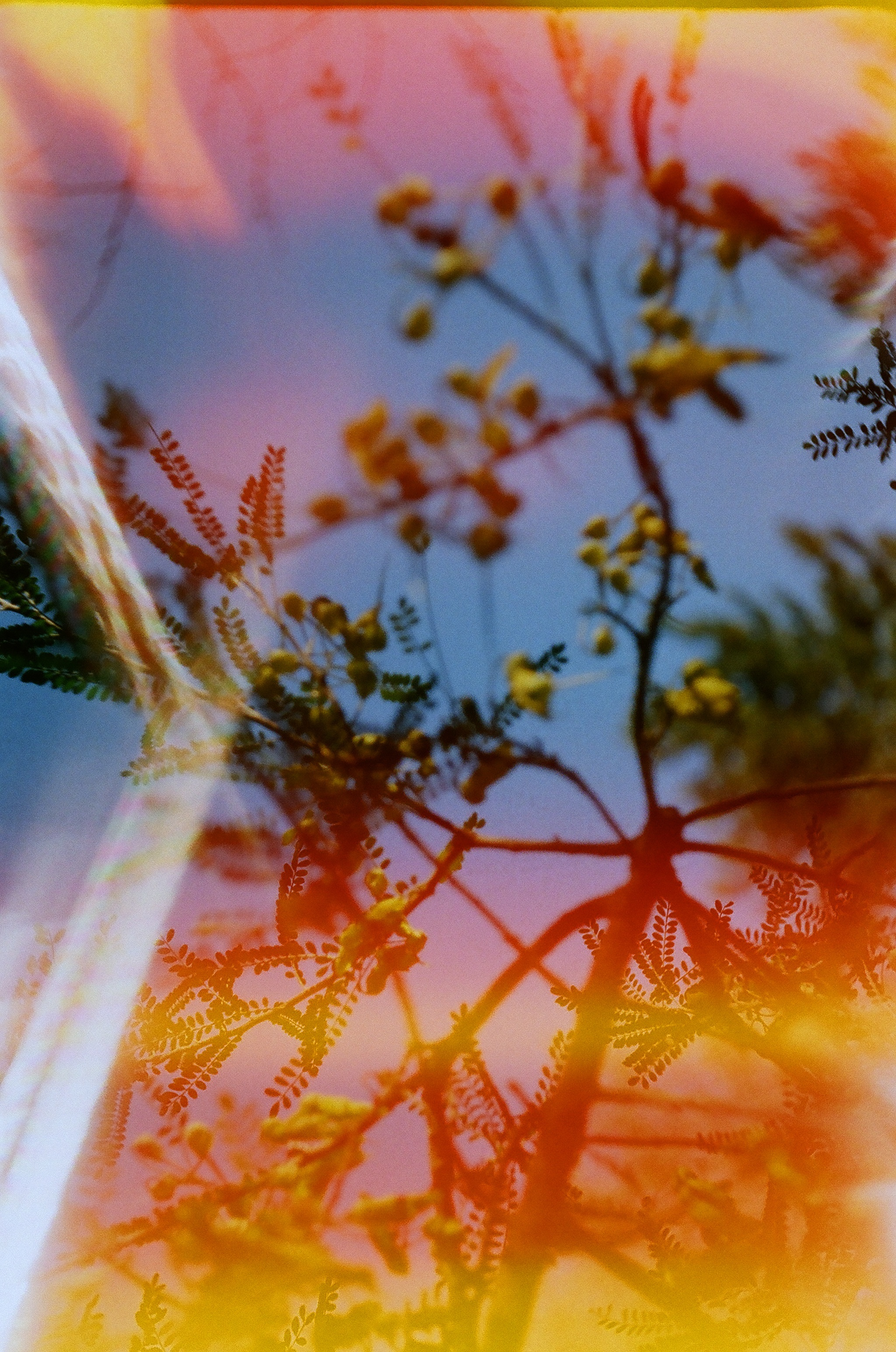 I quite like this Kowhai tree image taken on the Balda. It has a Lomography look to it with light spill, deep colours and some double exposure.