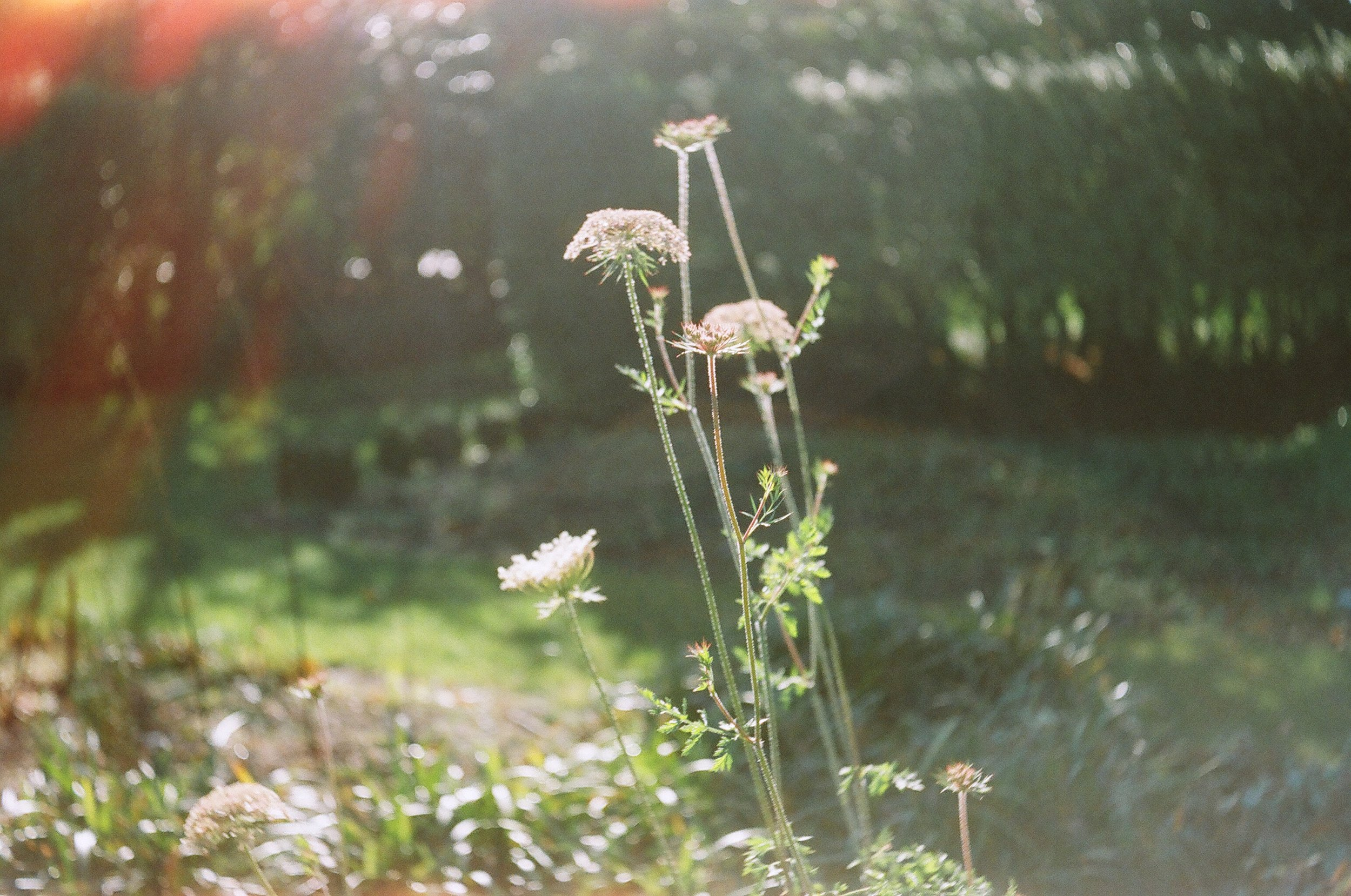 The focus was spot on in this image, it also has a lovely light leak in the upper left corner. Taken with Kodak Gold 200 film on the 1958 Balda Baldessa 1 a