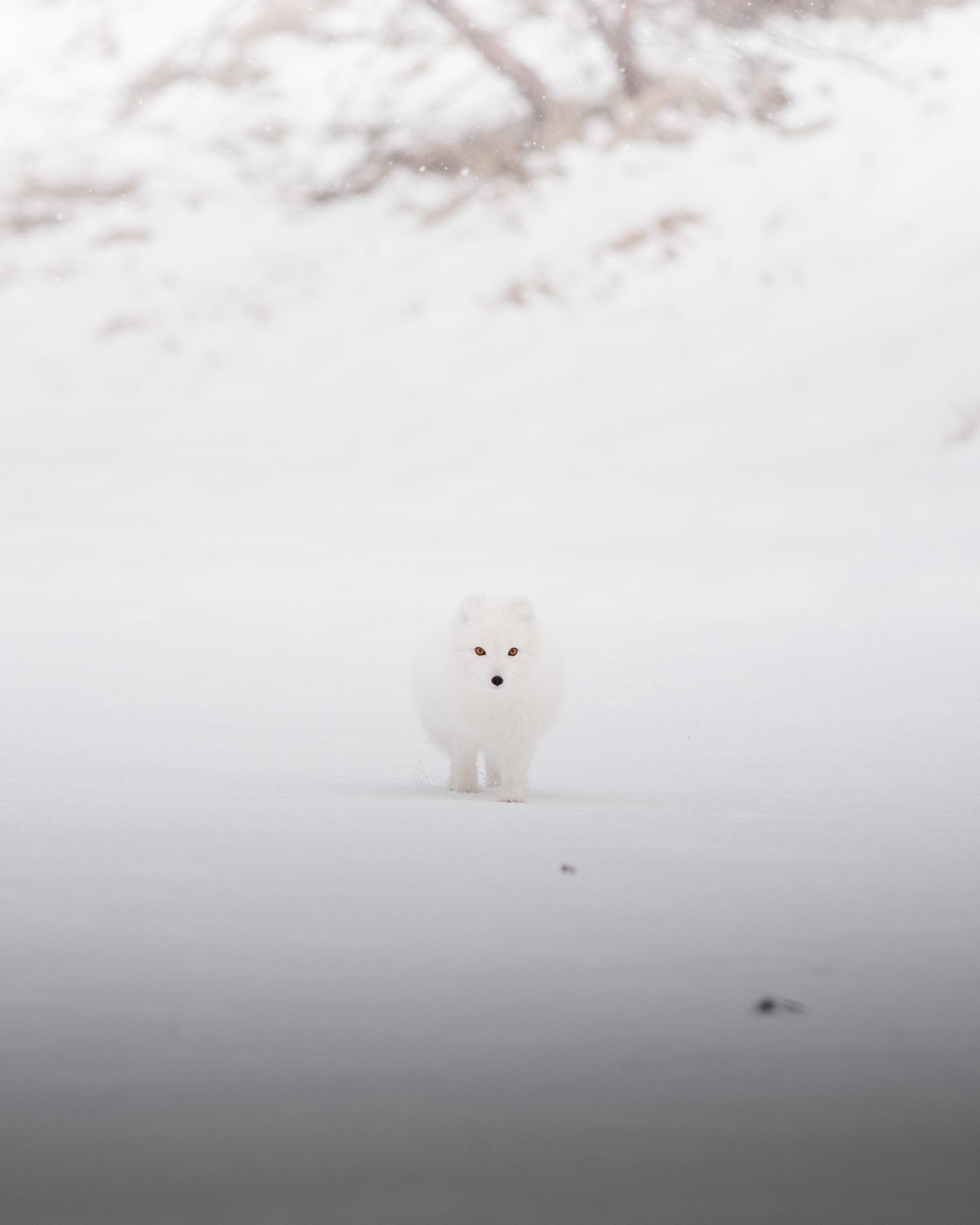 jermiah-schuster-iceland-148.jpg