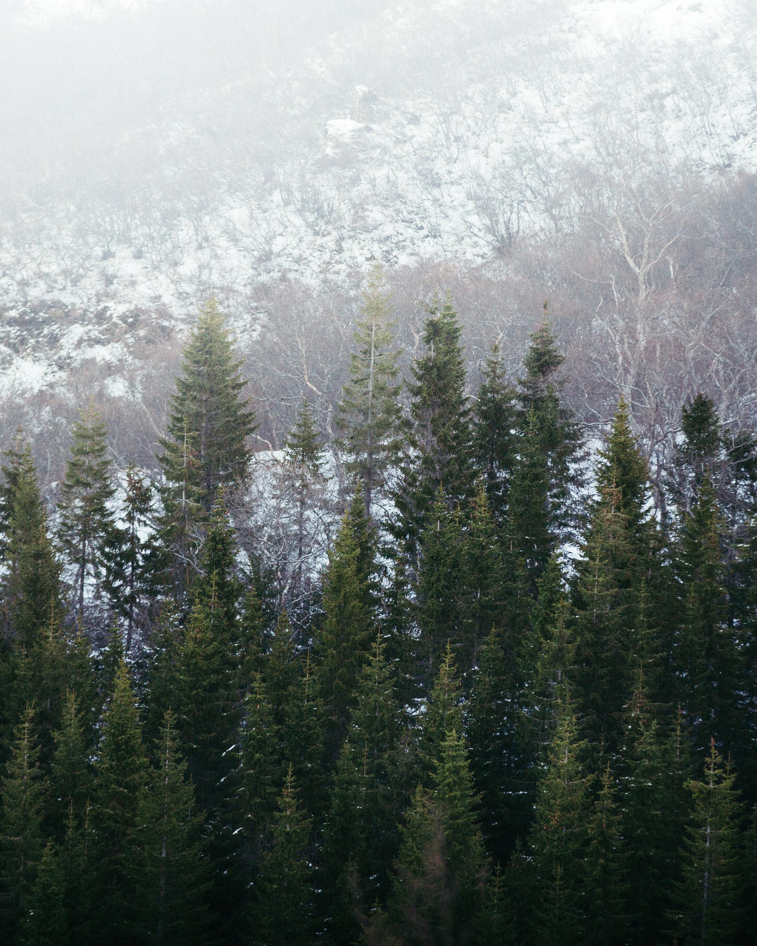 jermiah-schuster-iceland-199.jpg