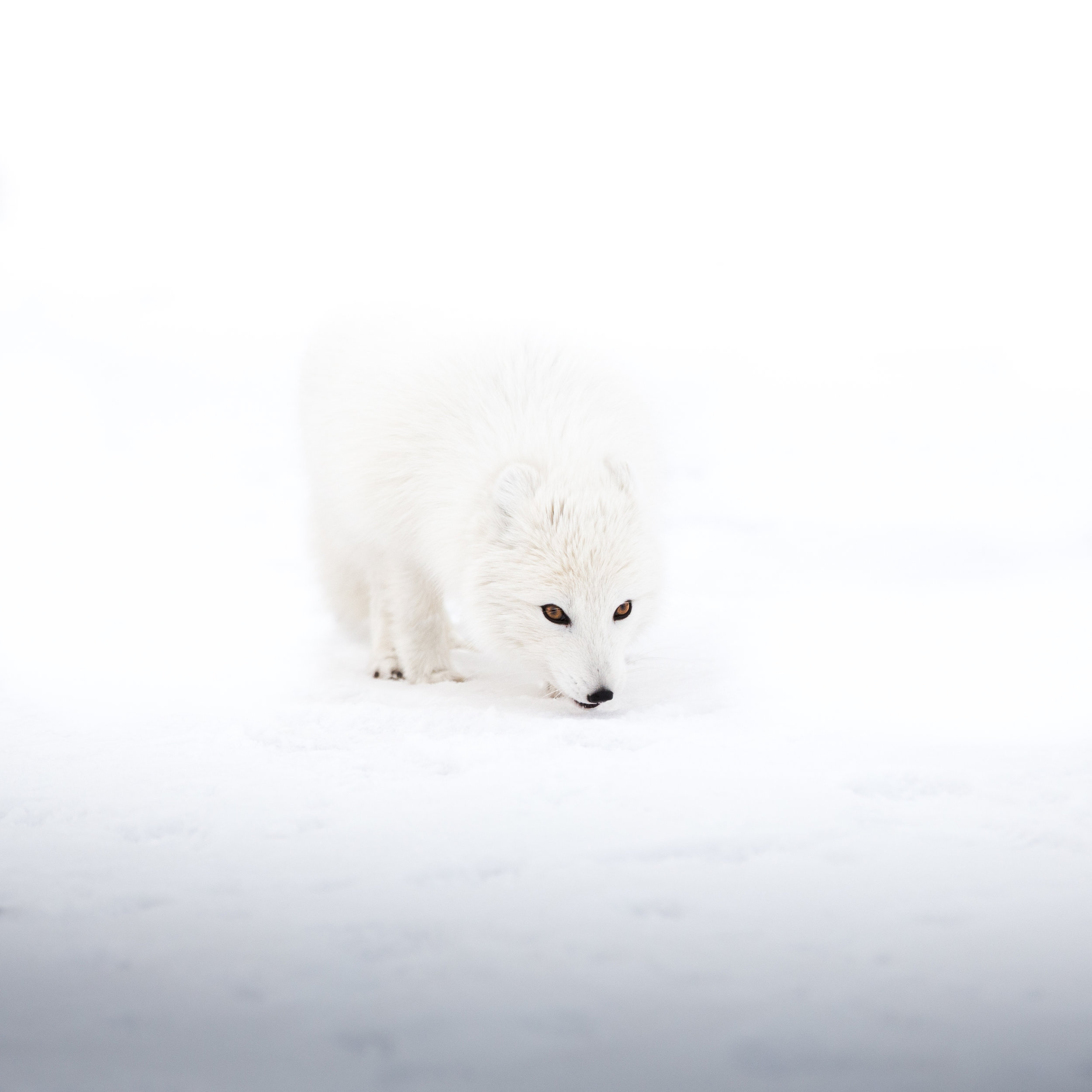 jermiah-schuster-iceland-250.jpg