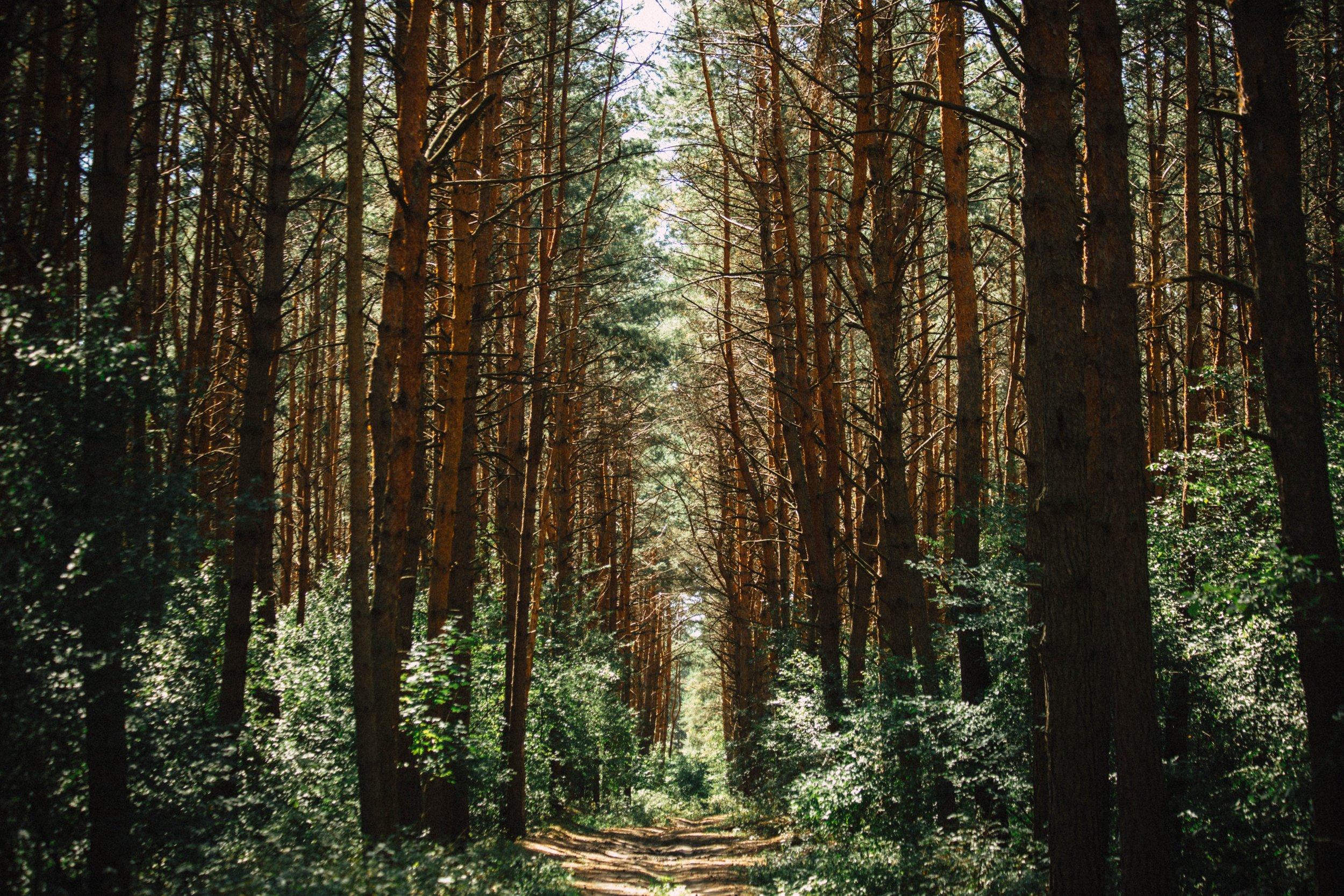 Lead to GROW - by Michael Winakur