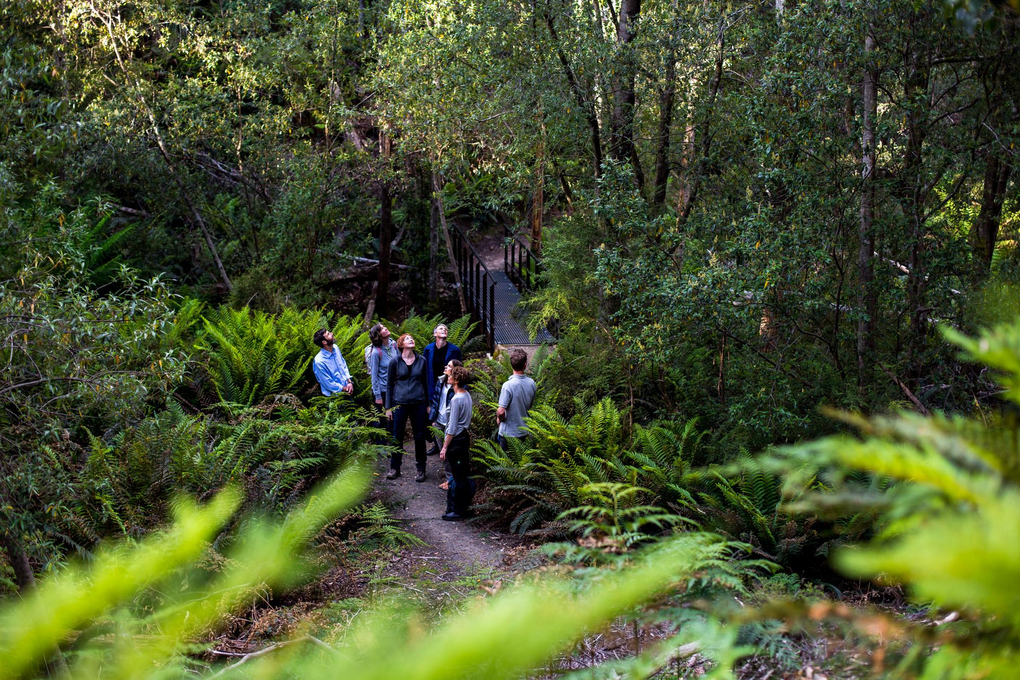 Walk in ferns and tall trees in Tasmania.JPG