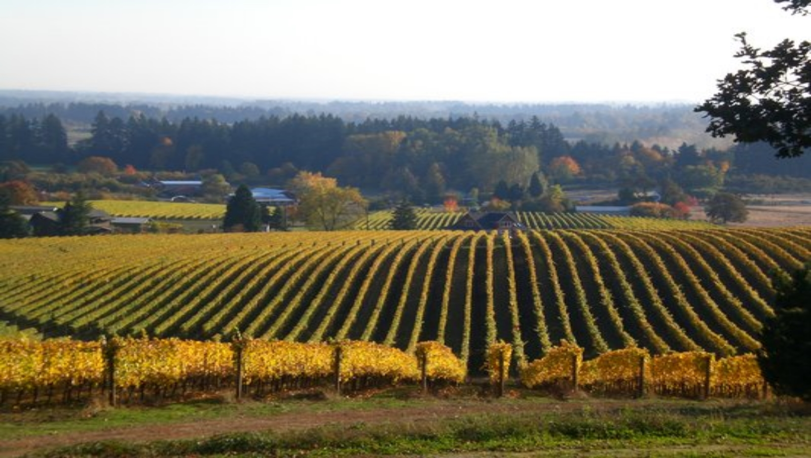 Single Vineyard Wines   Locally Sourced    Experience the Taste