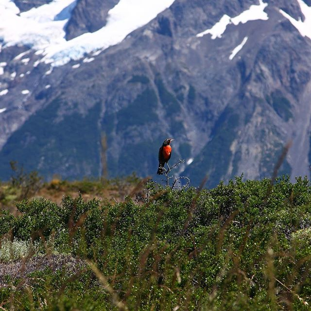 Stillness in nature | Patagonia, Chile 2011 #chile #photo #patagonia #photograph #chileanpatagonia #mountains #bird #nature #naturephotography #naturelovers #birdphotography #photographer #photoofday