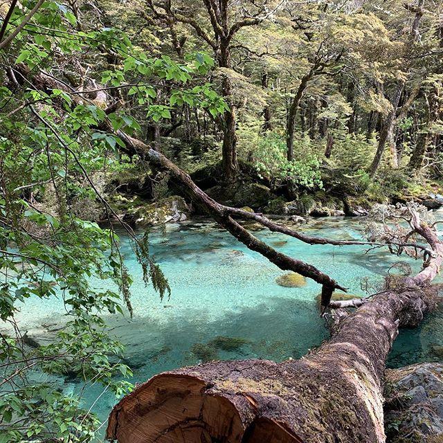 New Zealand | December 2018  #nature #travel #photography #naturephotography #newzealand #travelphotography #travelgram #photo #photographer #photooftheday #hike #optoutside