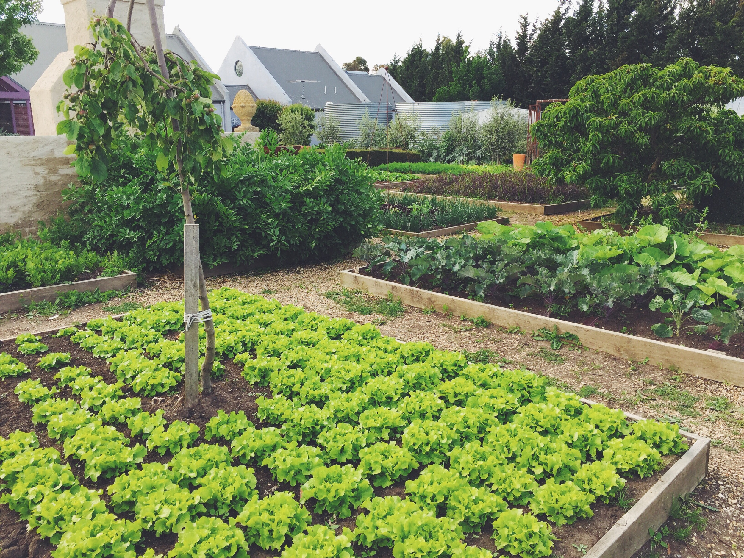the enviable  kitchen garden at weston farm