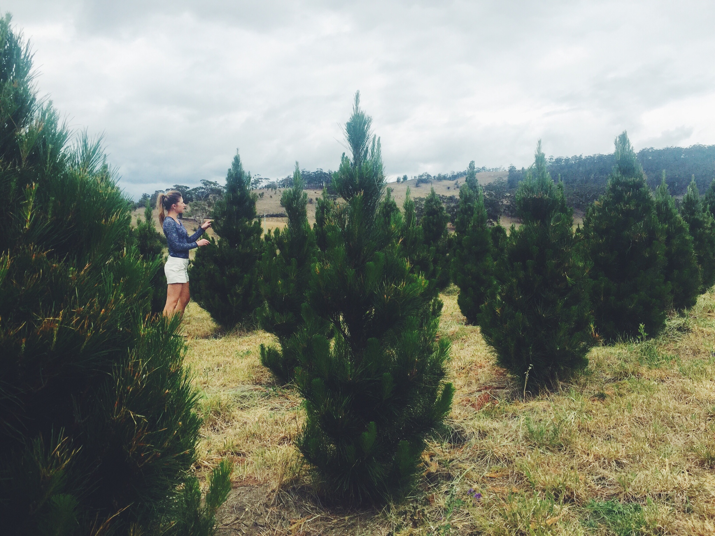 Searching for the 'one' at Richmond Christmas Tree Farm