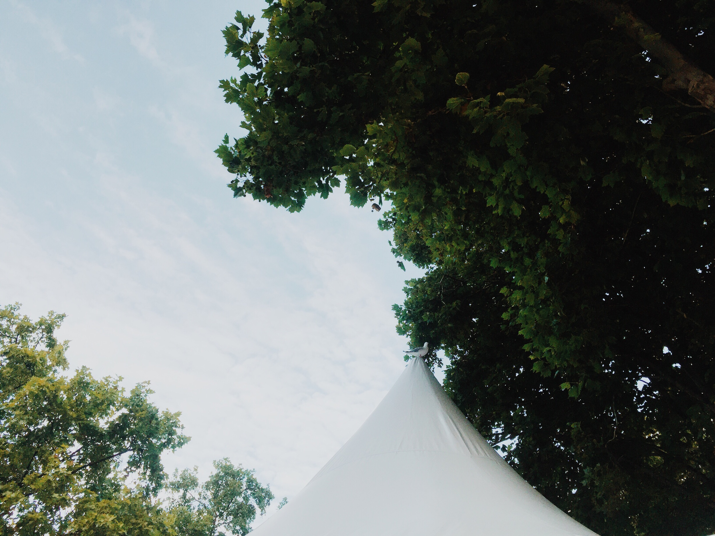 Seagull on a tent