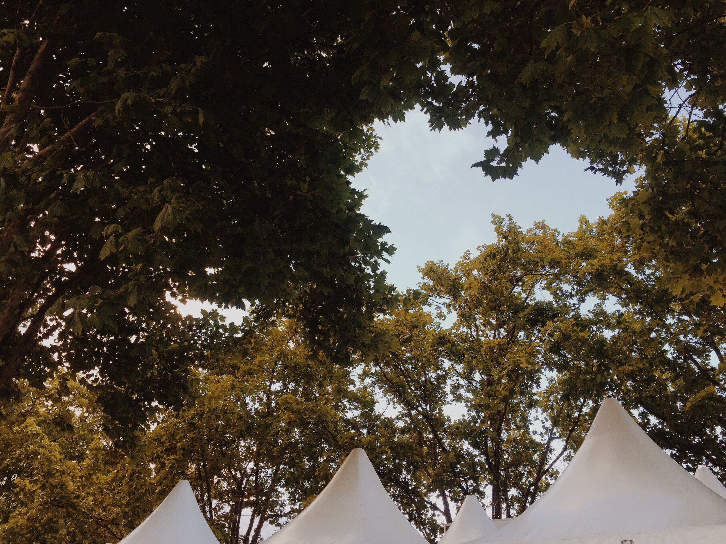 Love hearts in the trees over the event