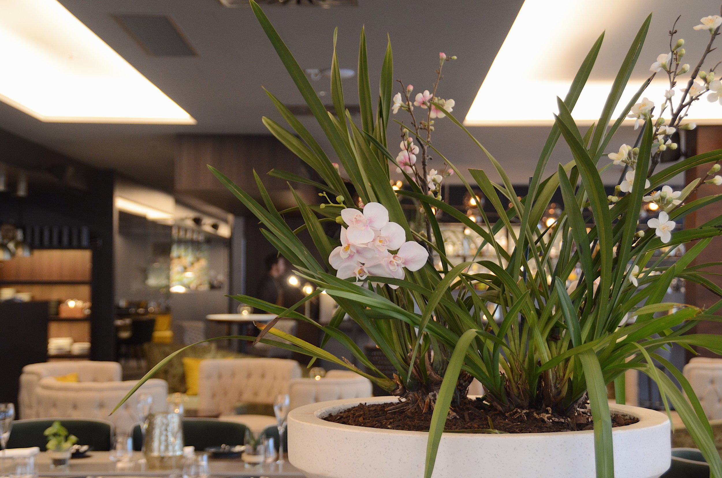the orchid display in the centre of the restaurant
