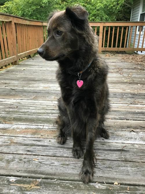 Meet Osita Shafer, my personal Black Dog Day ambassador.