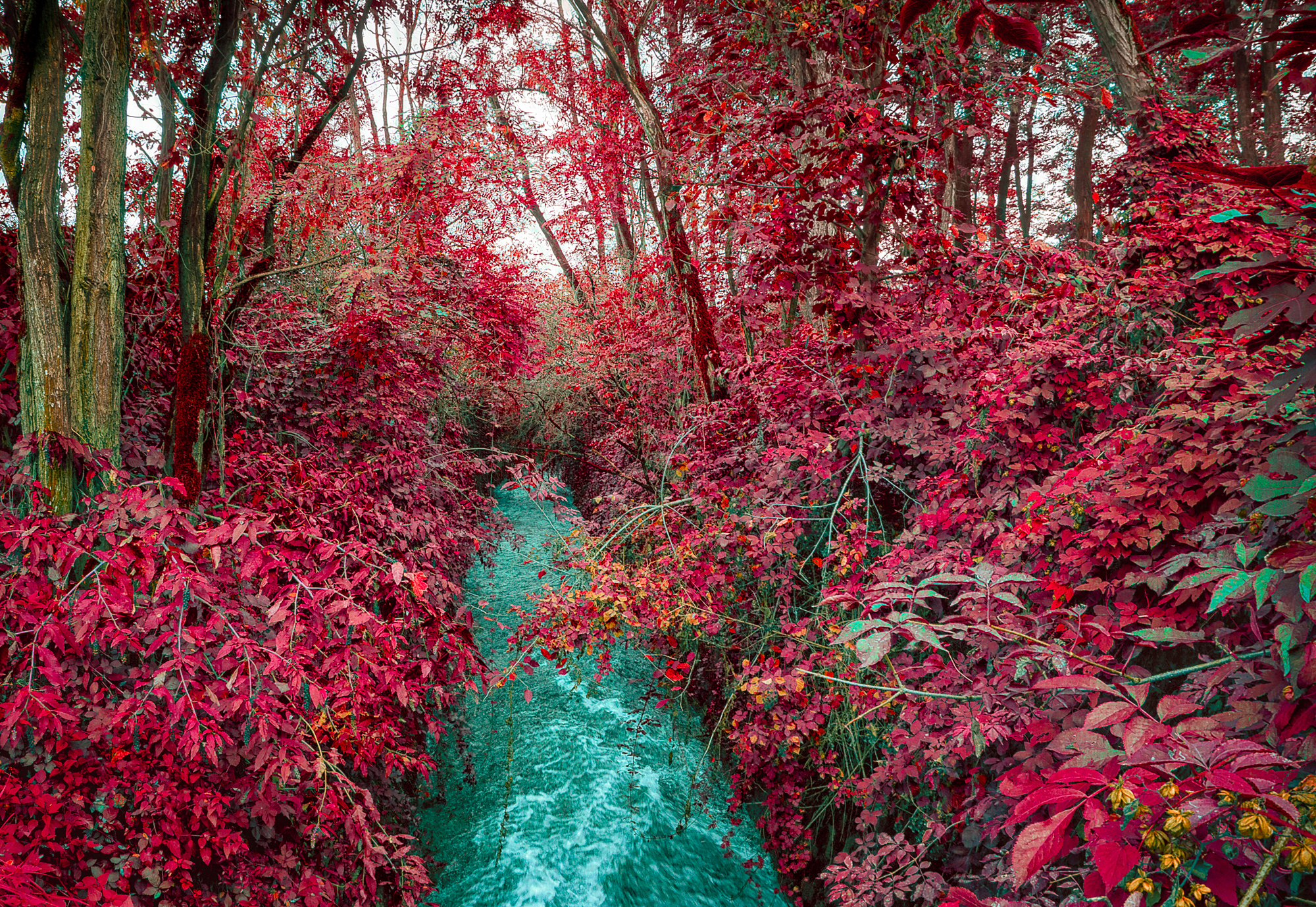Lining the canal with extraordinary color. It's ok to improve upon nature at times, right?