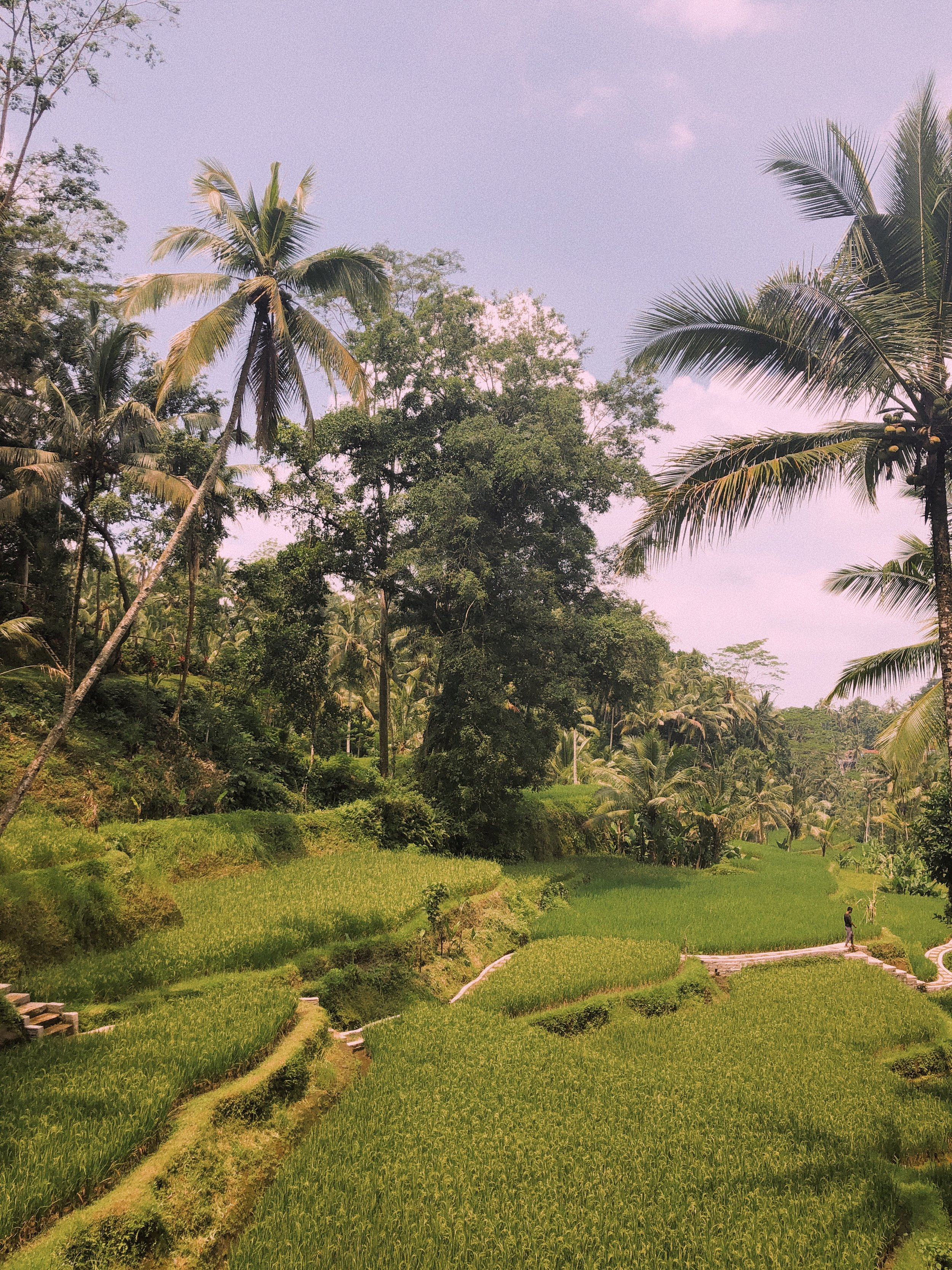 The Bali Travel Guide - Amour Ophelia