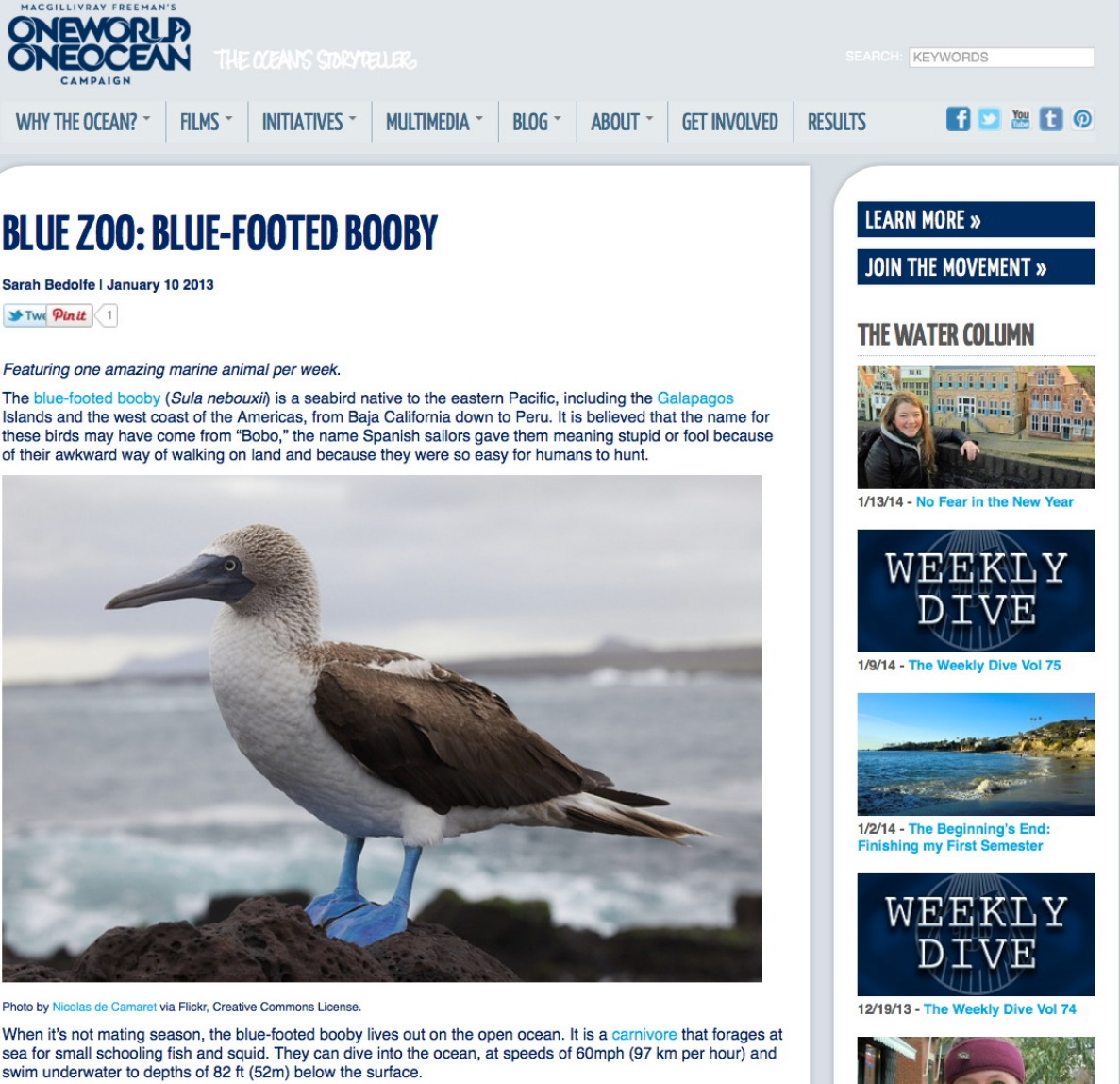 http://www.oneworldoneocean.com/blog/entry/blue_zoo_blue_footed_booby