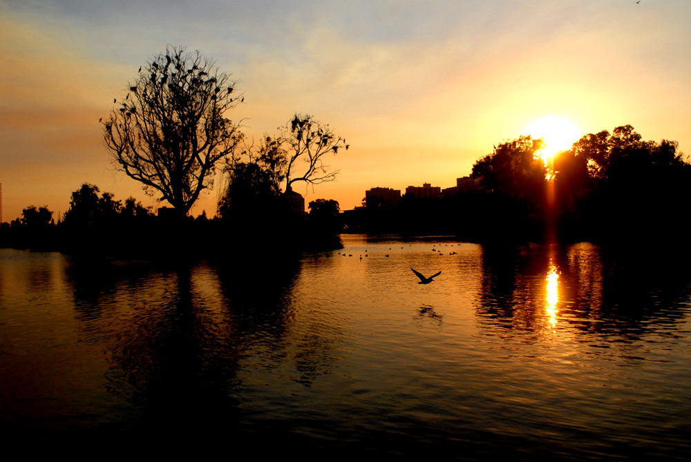 Lake Merritt Sunset. Oakland California 2013 © Kalman N. Muller