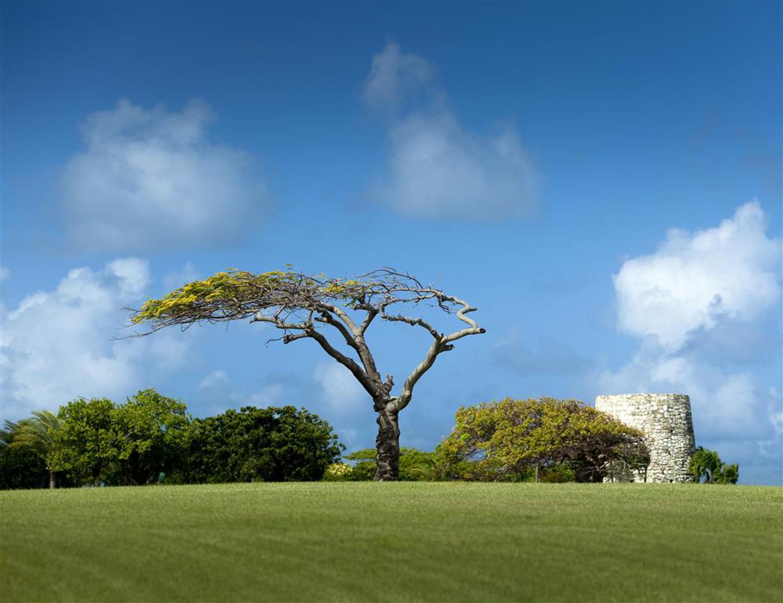 08 - Sugar Mill with Tree (Medium).jpg