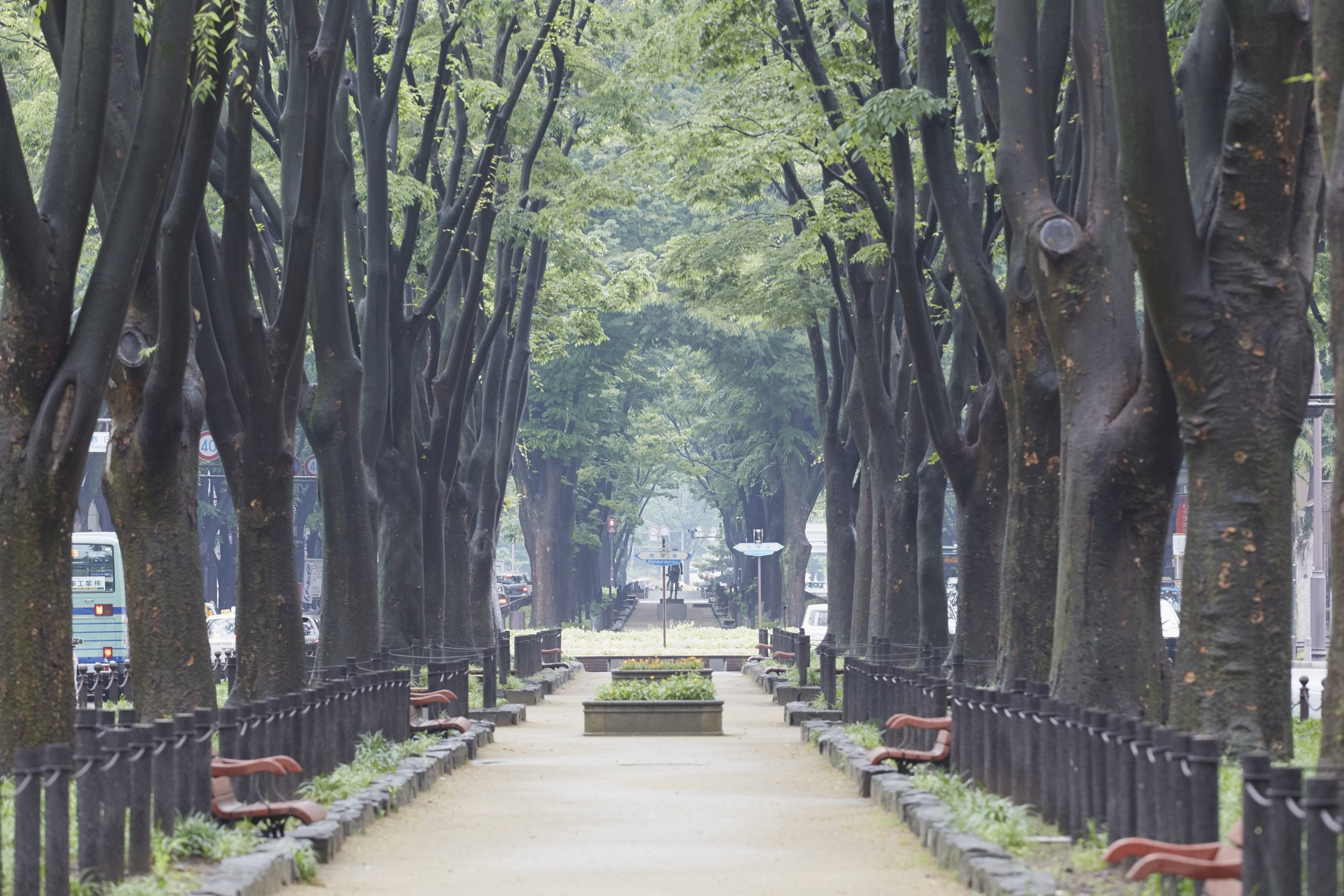 Miyagi - City of Trees.jpg