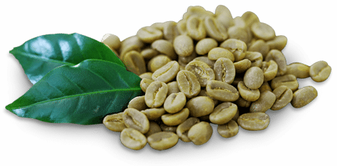 Organic Green Coffee Bean Oil Cold Pressed Unrefined 100