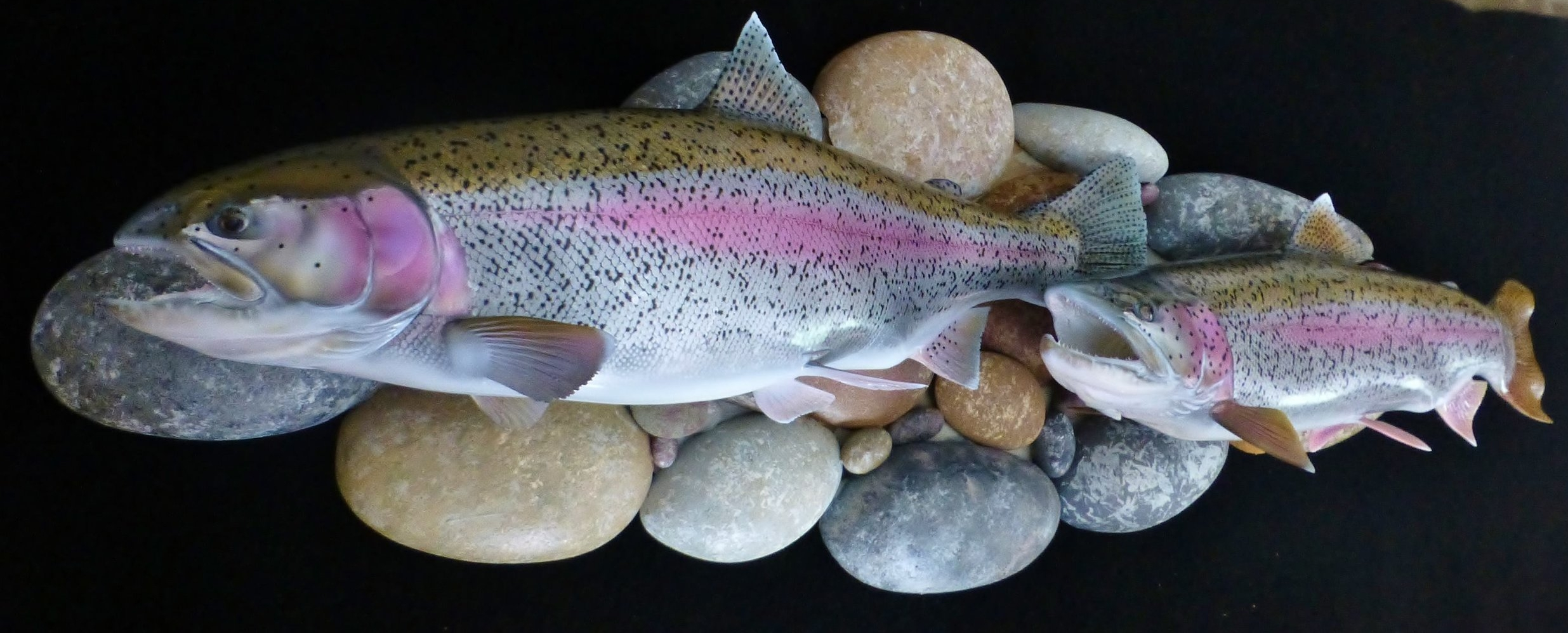 Kenai rainbow trout fish art replica sculpture Luke Filmer Blackwater replicas