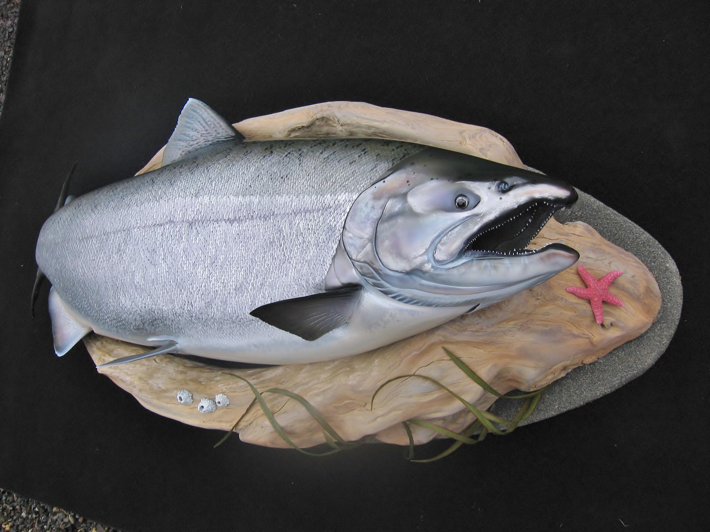 Chinook Salmon fish replica art sculpture by Luke Filmer of Blackwater