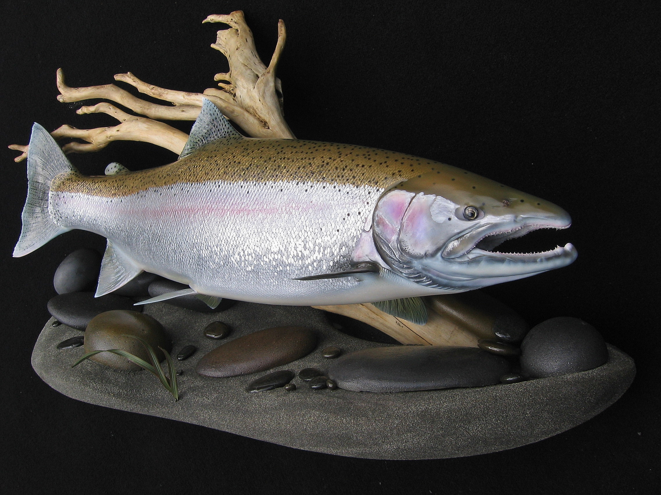 25 lb. Steelhead Fish Replica on streambed habitat wall display Luke Filmer Blackwater
