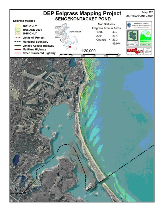 Recent eelgrass meadows and former extension beds as determined by 1951 aerial photography. Mapping of eelgrass over the decades documents losses