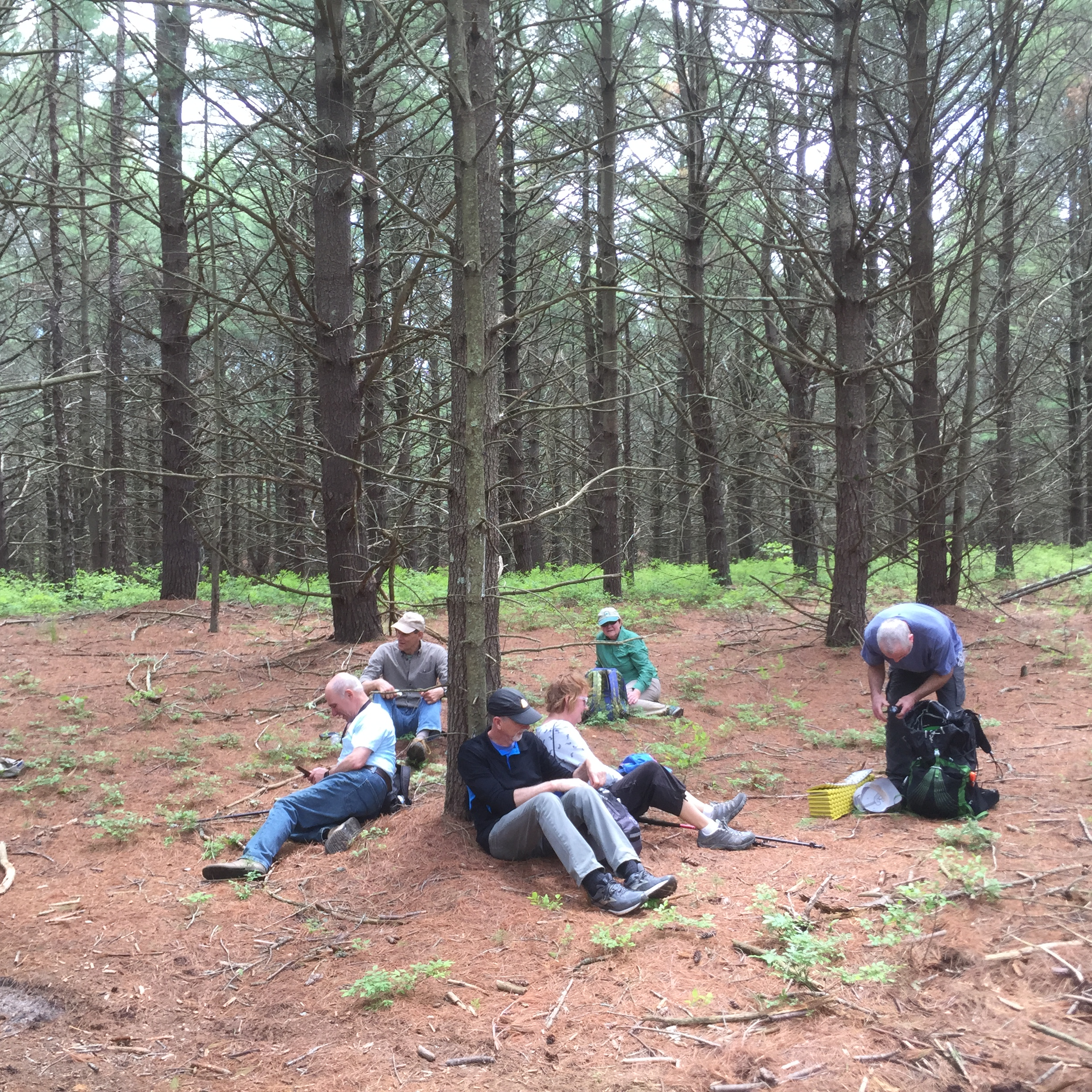 A leisurely lunch in the shadows of the cathedral pines (Part I)