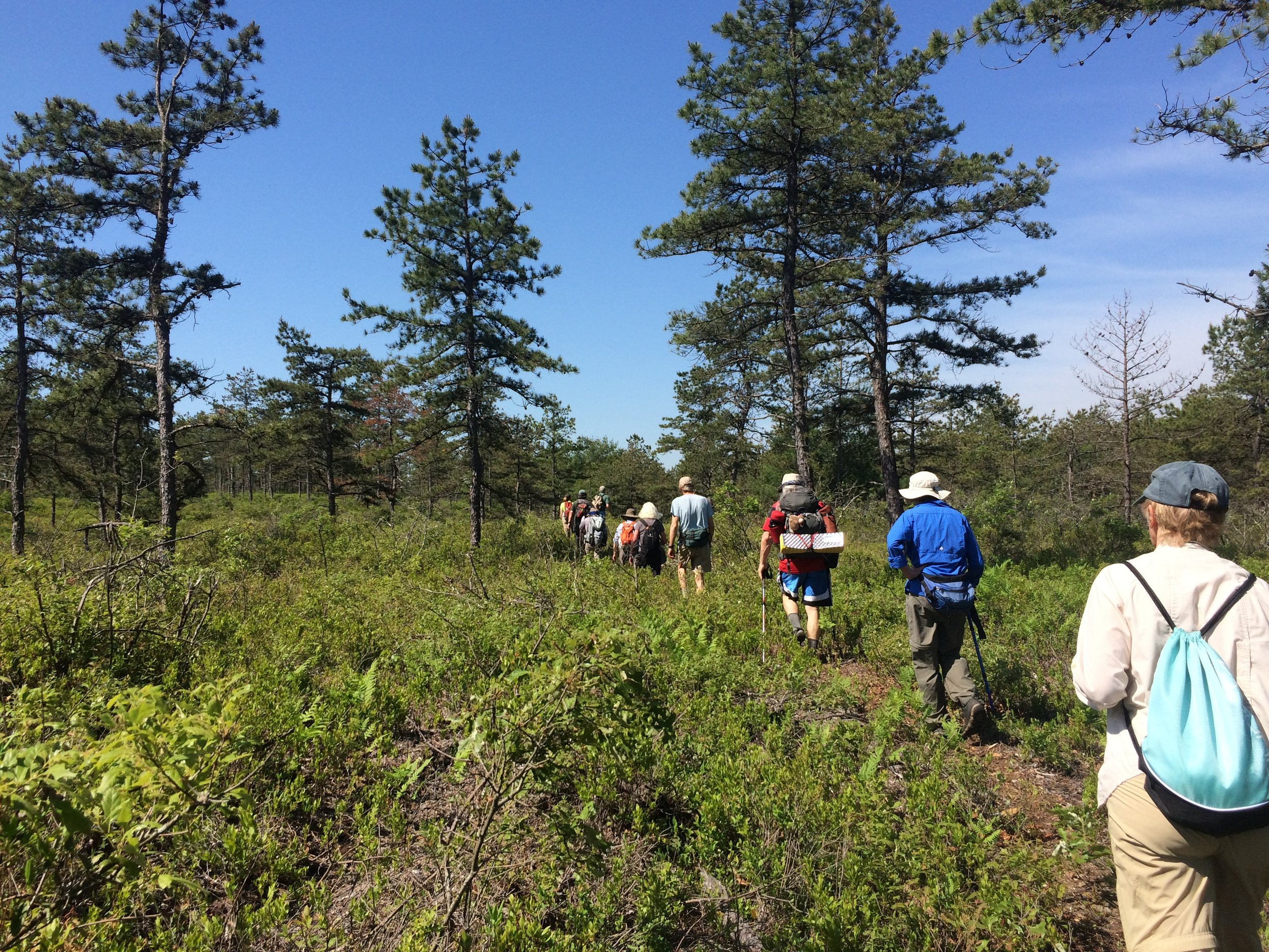 Traversing through open woodland (Part II)