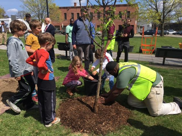 Trees are planted on public and private lands at absolutely no cost. Volunteers help plant this tree in a Brockton park!