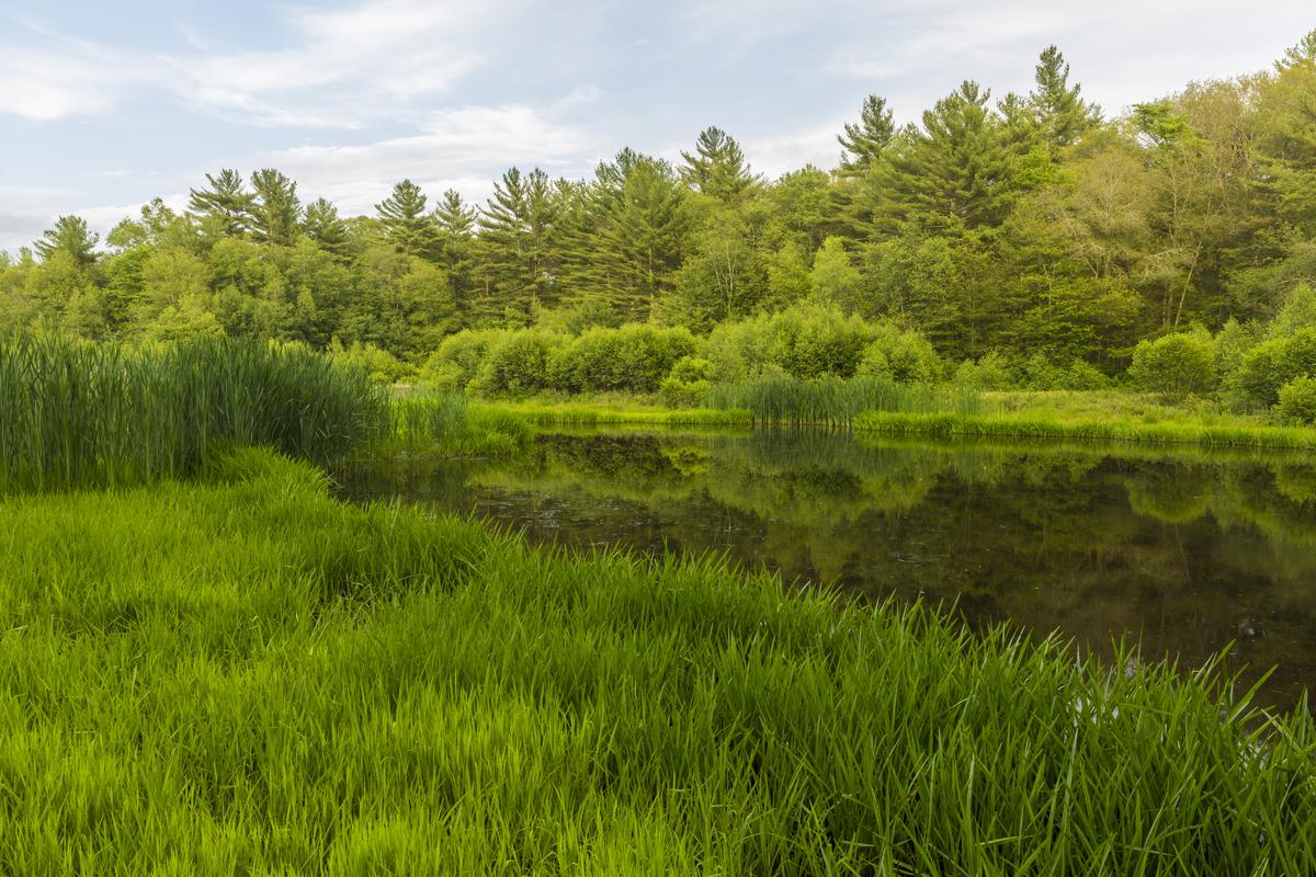 Wetlands at Striar Conservancy, Halifax