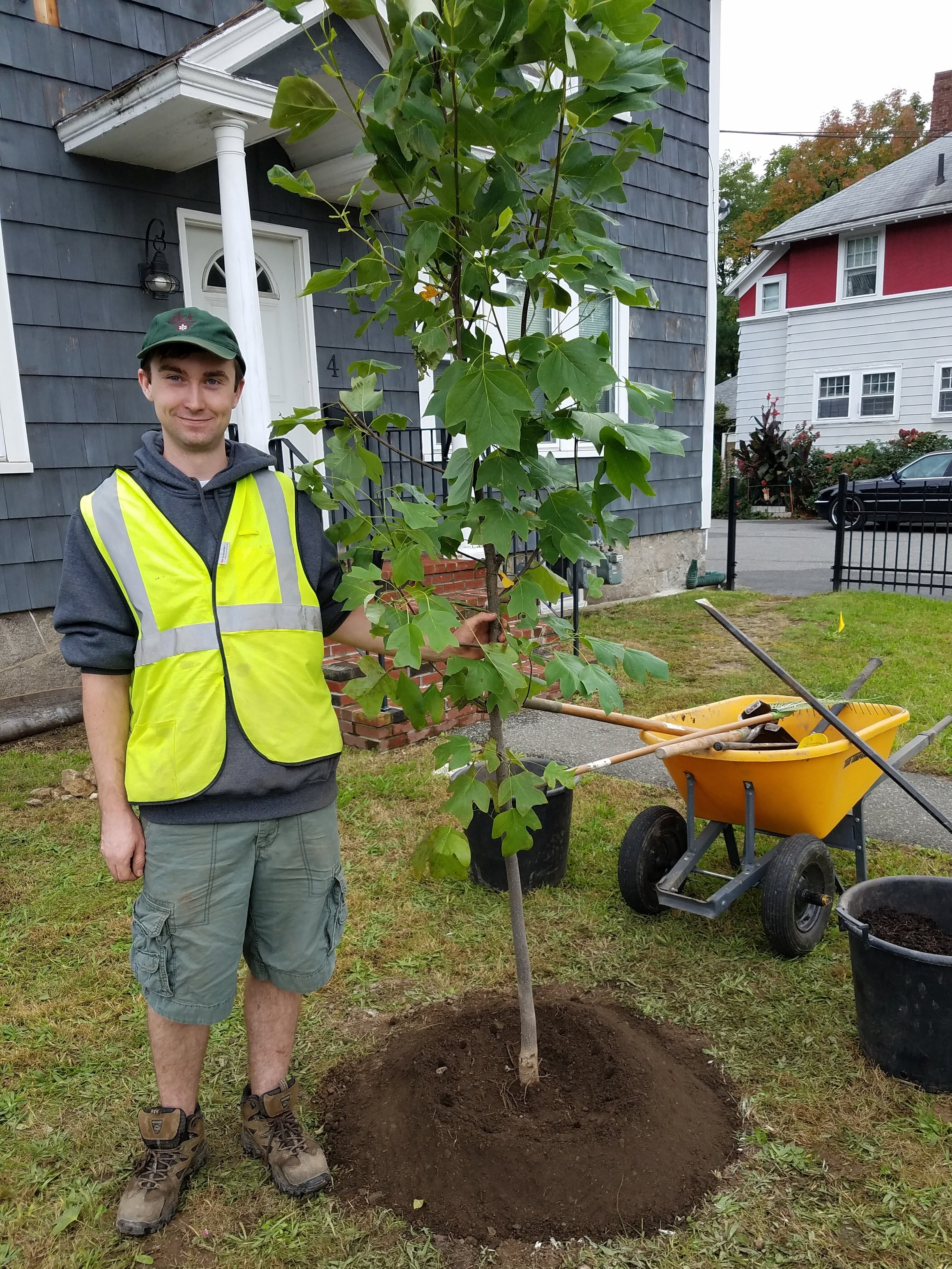 A DCR forester stands next to a recently planted sapling.