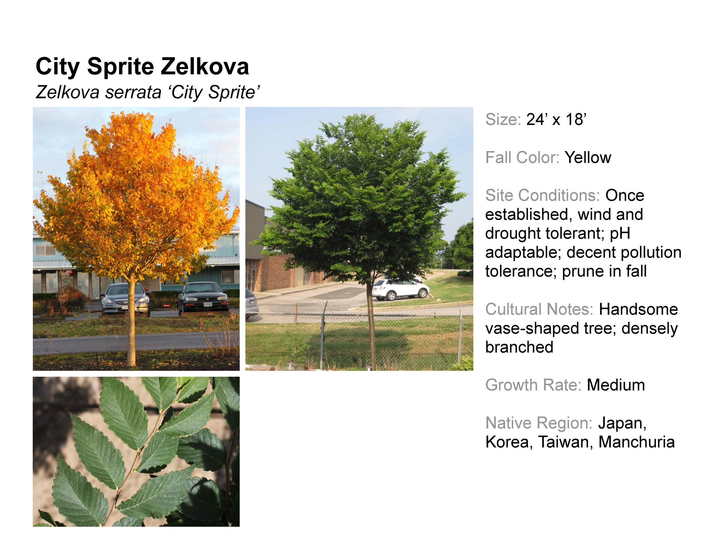 City Sprite Zelkova