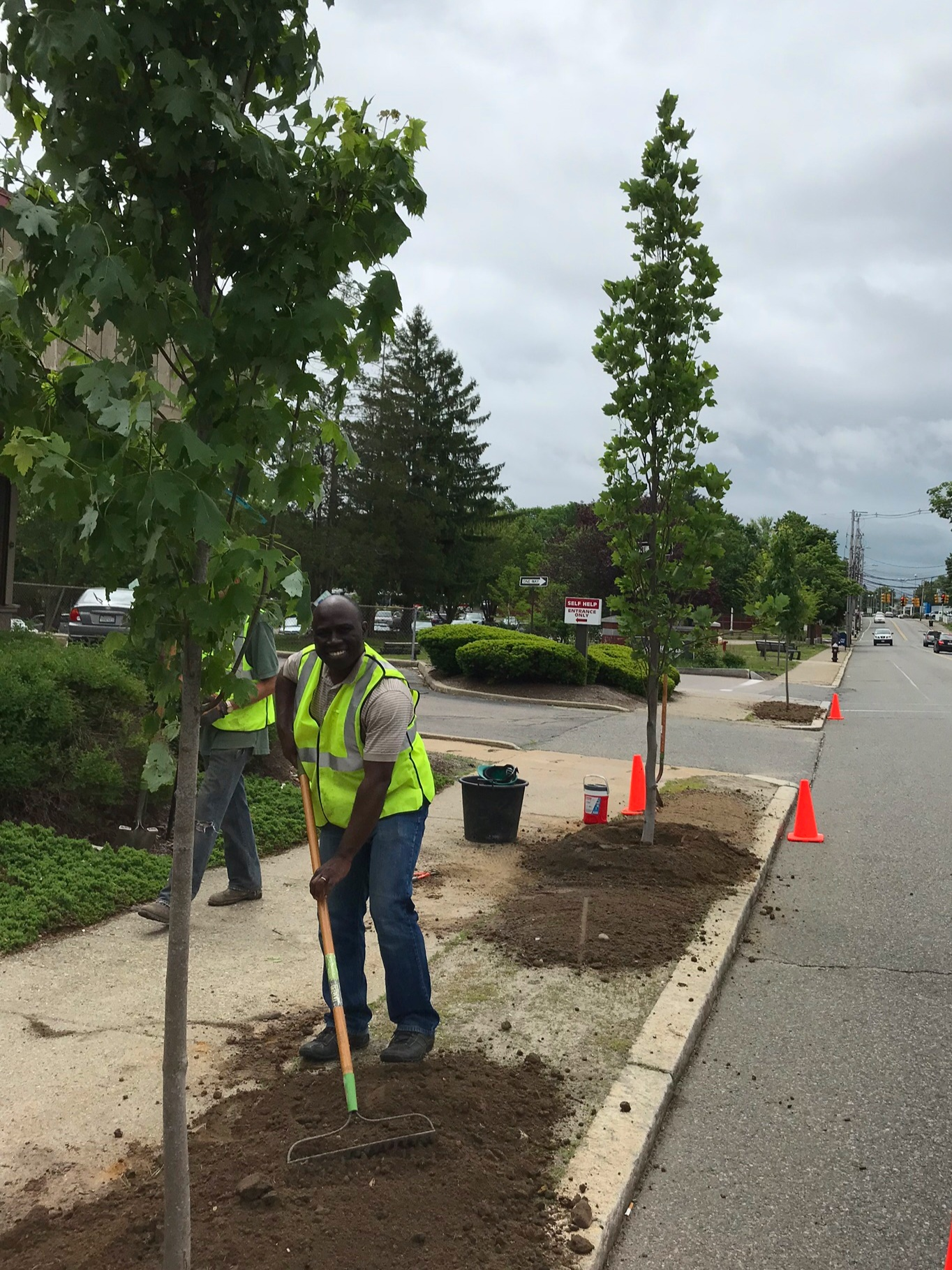 (Above) Street trees being planted as part of GGCP. By 2020, thousands of newly planted trees will line the streets and fill the yards of Brockton residents.