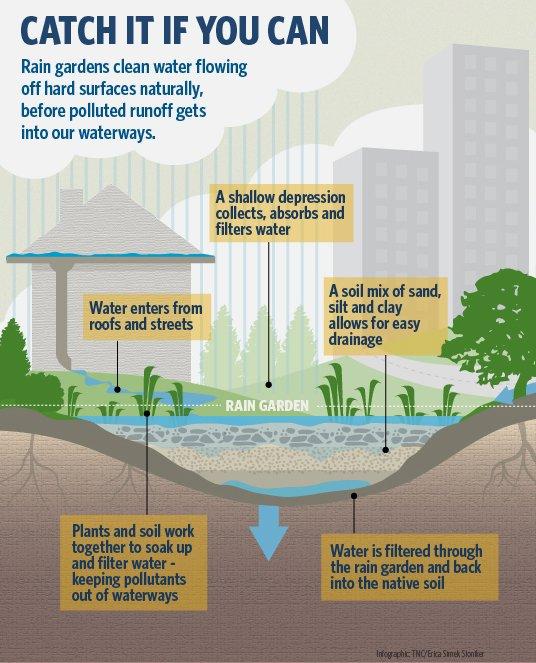 A basic rain garden schematic. (Source:    https://www.natureworkseverywhere.org/   )