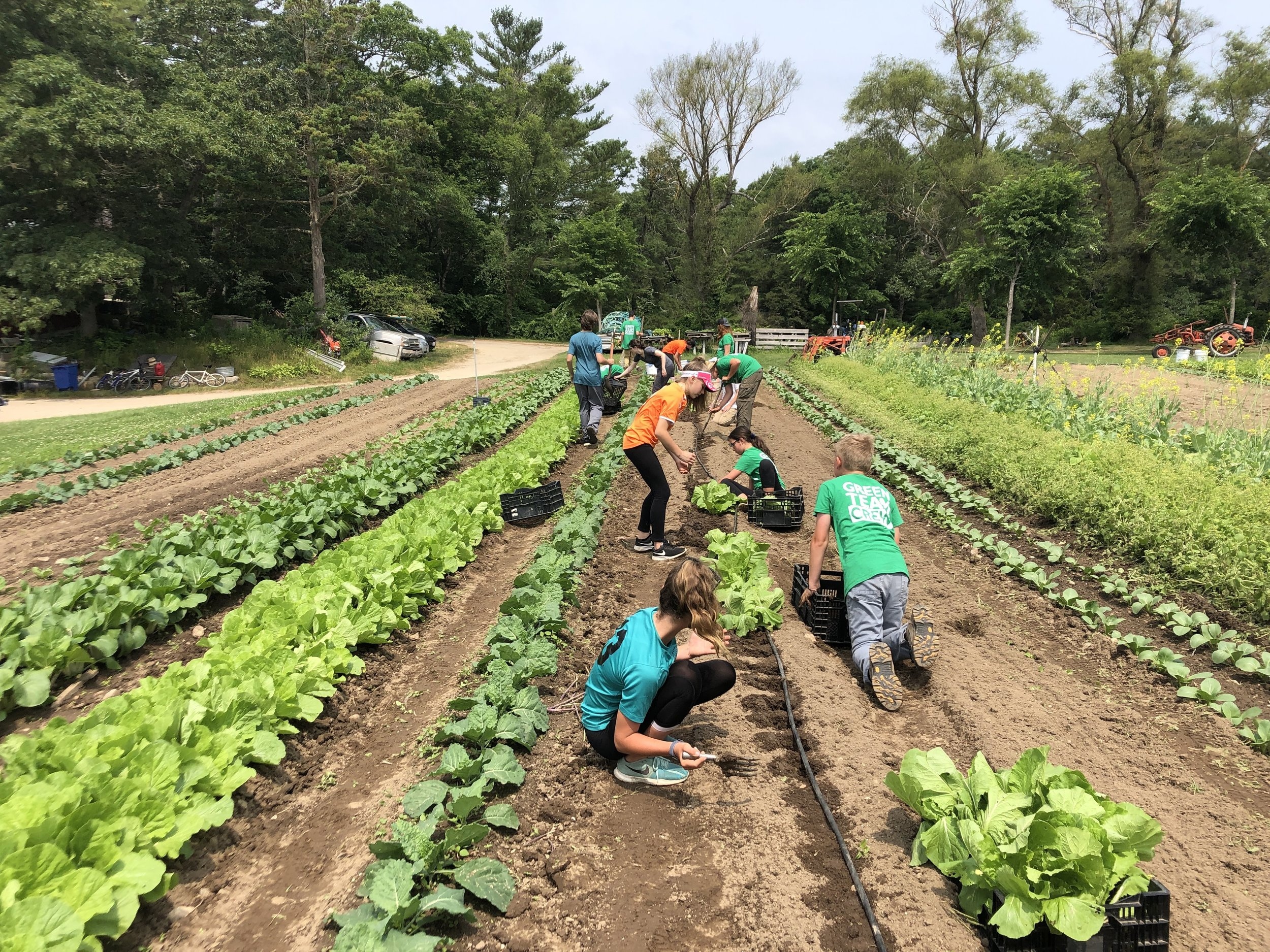 Green Team 1 crew members get their hands dirty at Bay End Farm.