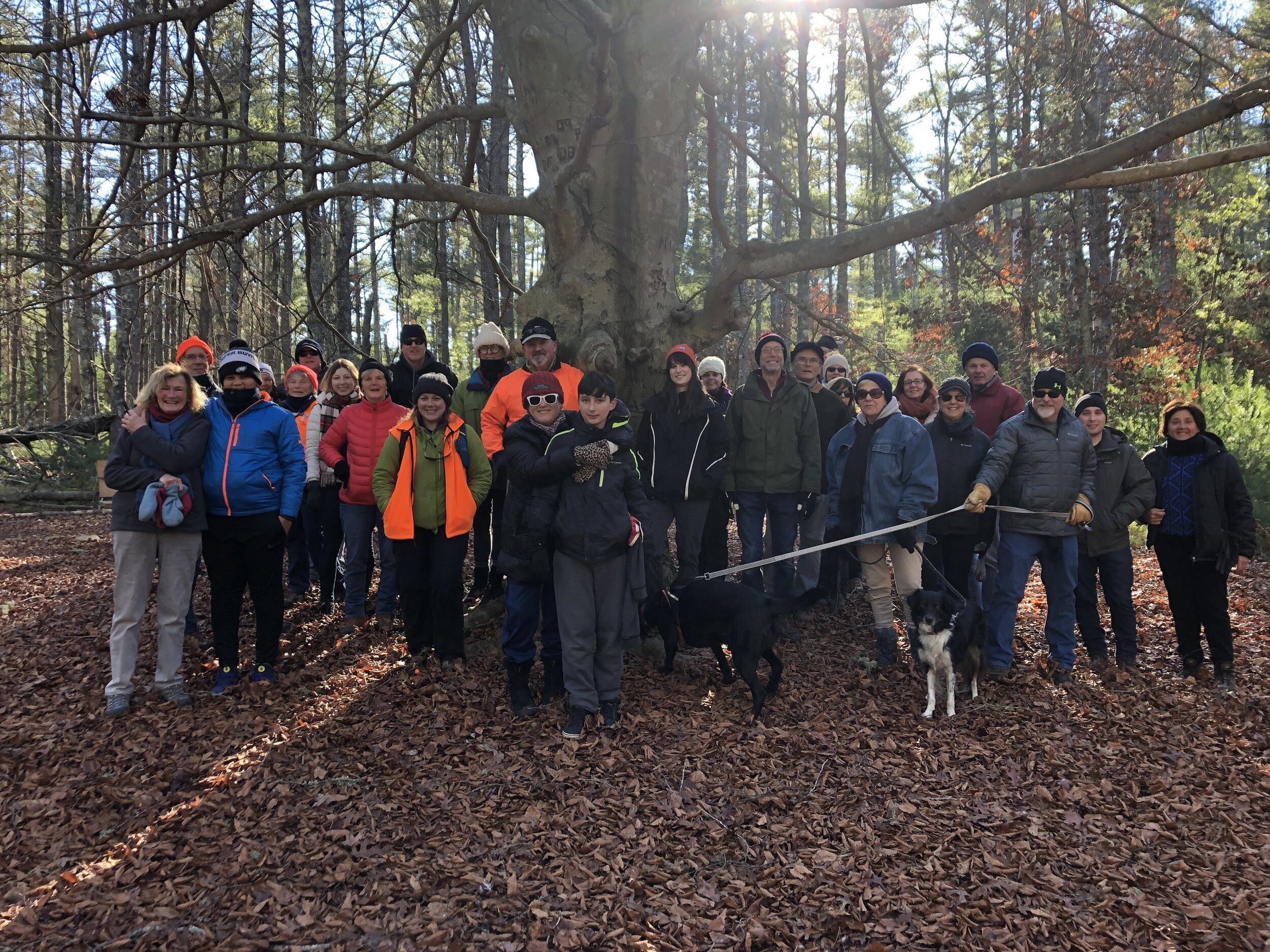 Hikers gather at the Beech Tree Clearing at the 2018 Post Feast Waddle.