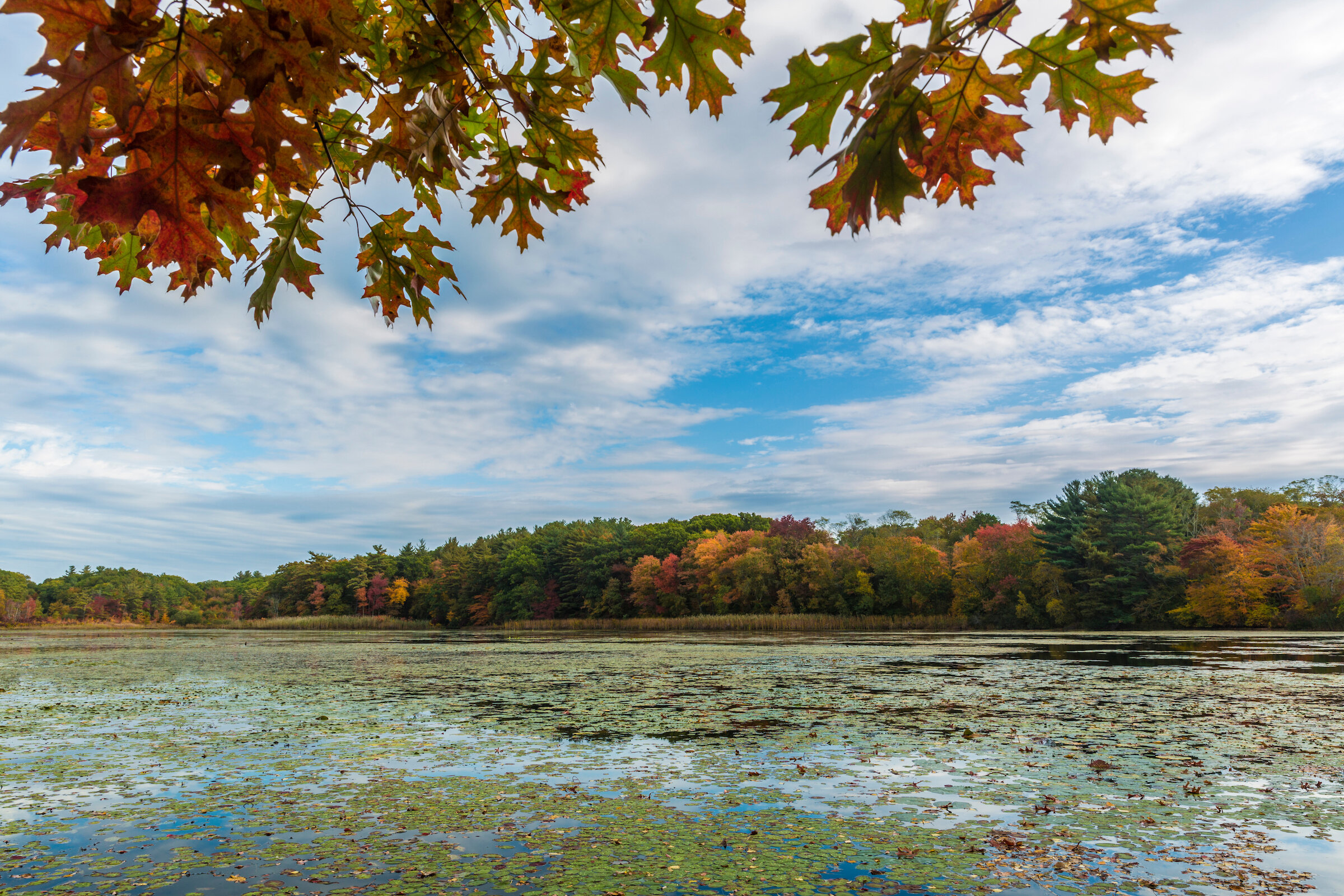 Hoyt-Hall Preserve in Marshfield boarders Long Tom Pond, a stunning view in the fall.   Learn more about the preserve…