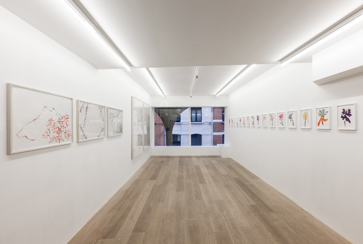 Lisa Blas.  Still Lifes, Sometimes Repeated  (exhibition view) Photography Vincent Everarts
