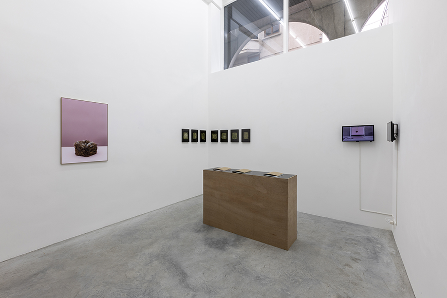Sarah Van Marcke.  Territorial Drift  Exhibition View