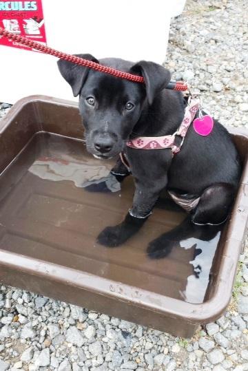 Jasmine in the water bowl.jpg