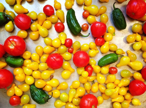 tomatoes2crop.jpg