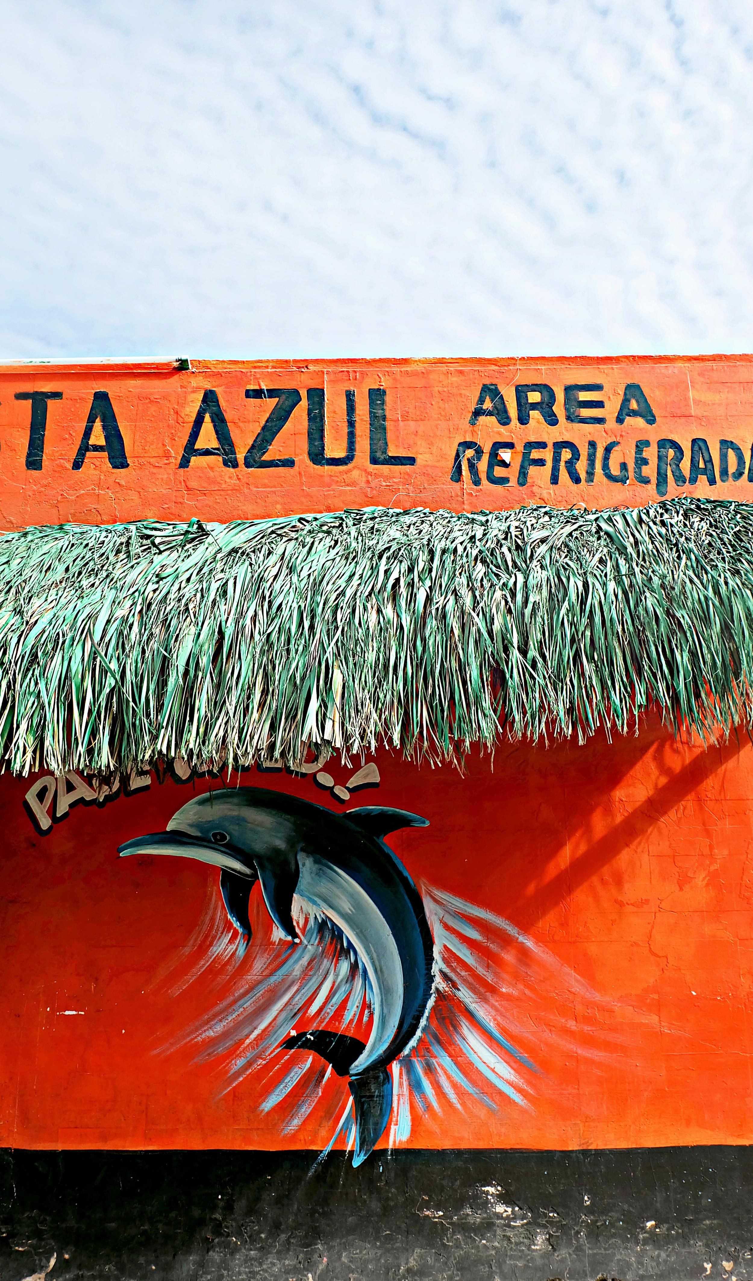 Mexico_Bajia_de_Kino_Dolphin.jpg