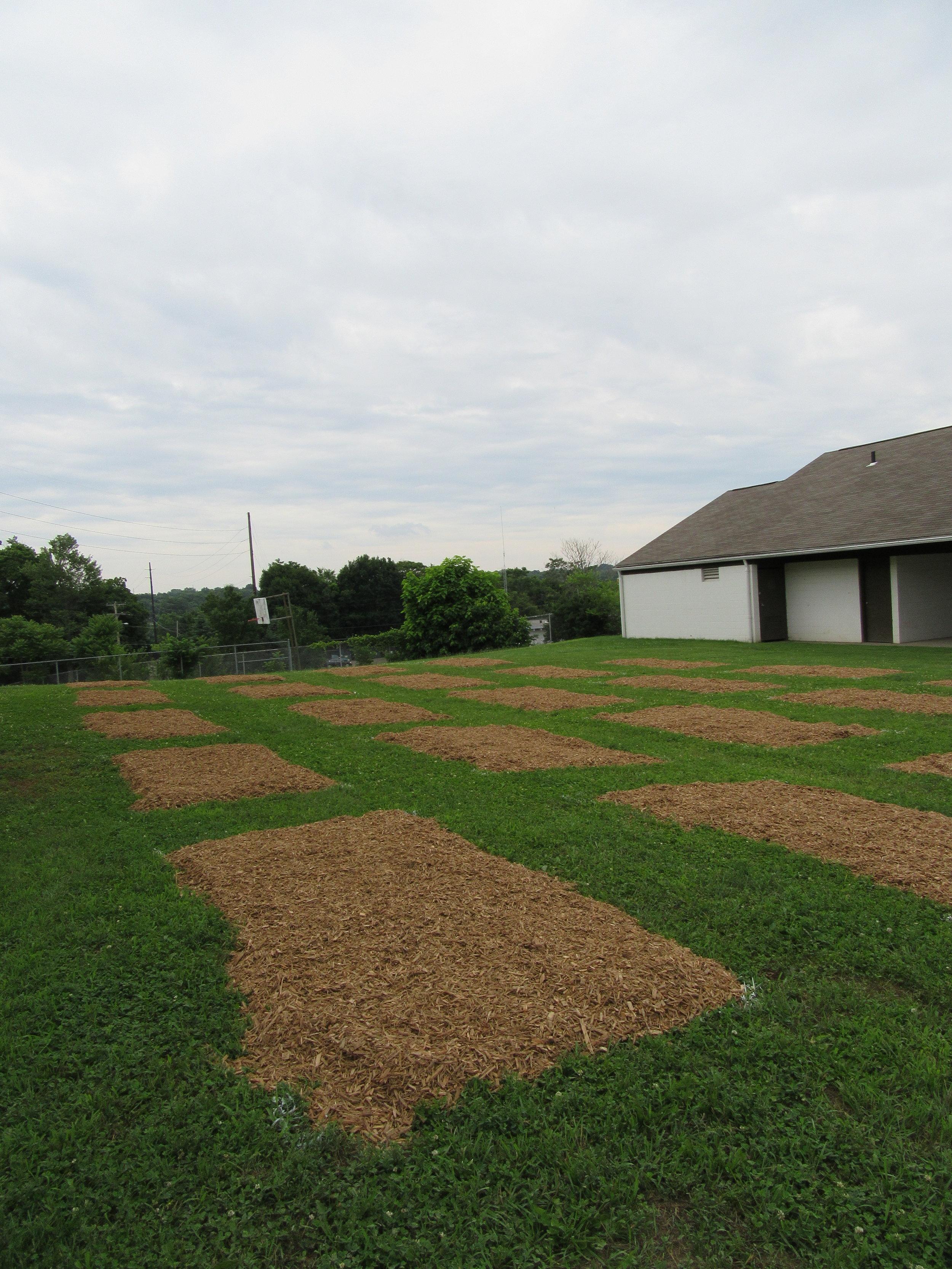 ROW 21 - Community Garden at Massillon Boys & Girls Club_2.JPG