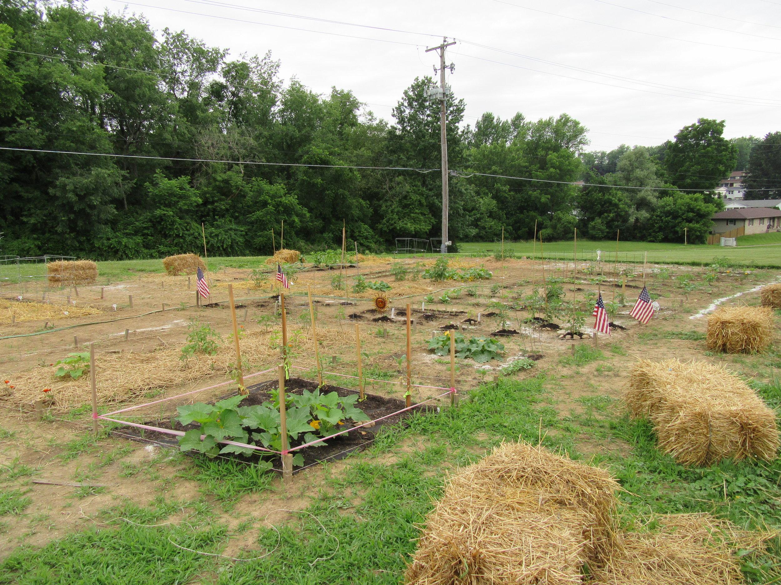 ROW 23 - Community Garden at RiverTree Church.JPG