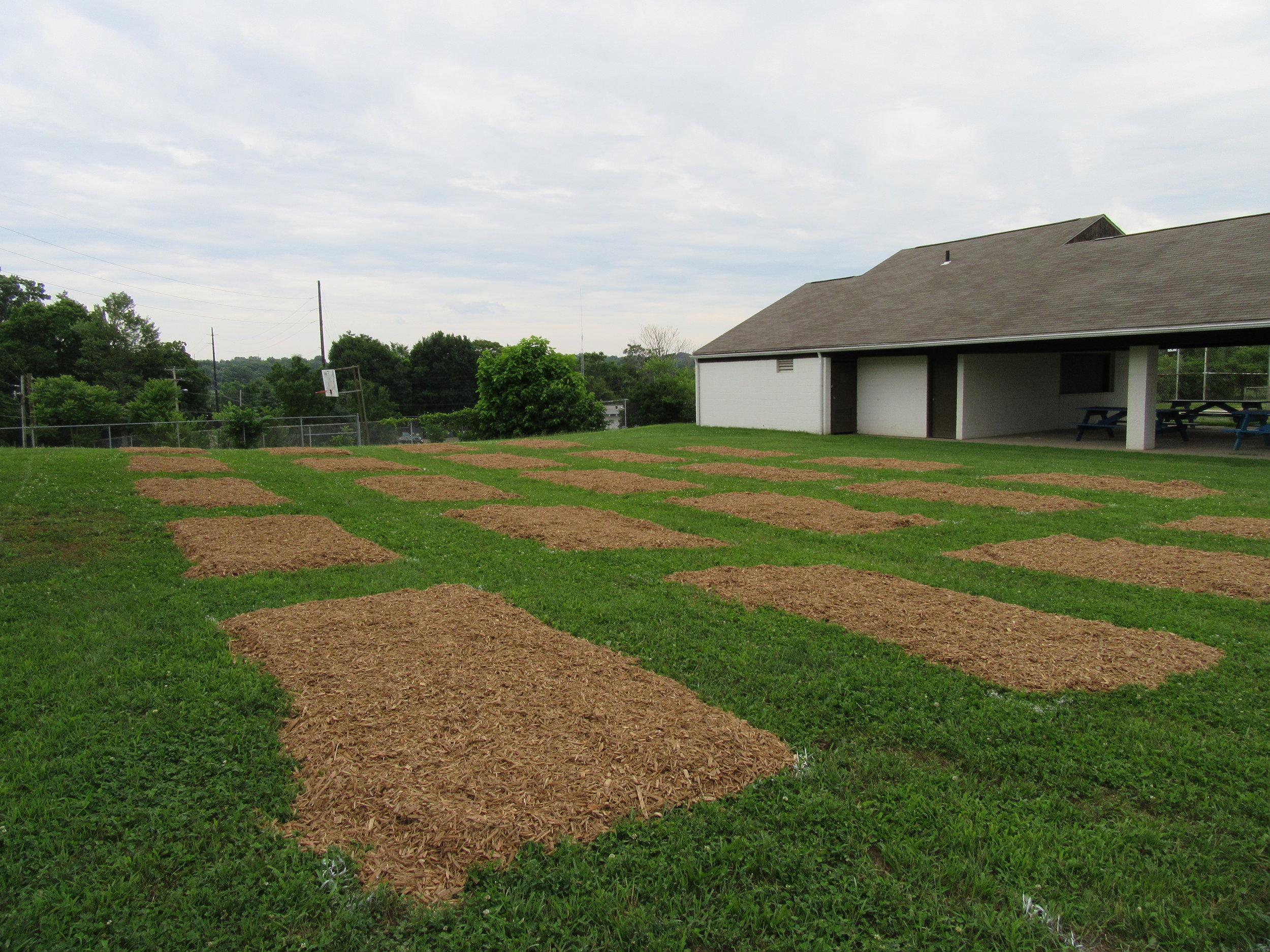 ROW 21 - Community Garden at Massillon Boys & Girls Club_3.JPG