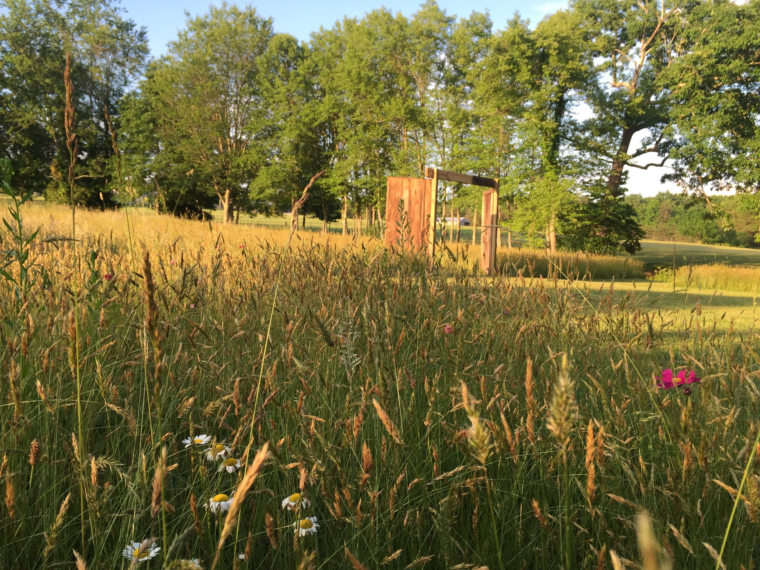 Field with wild flowers ready for a wedding