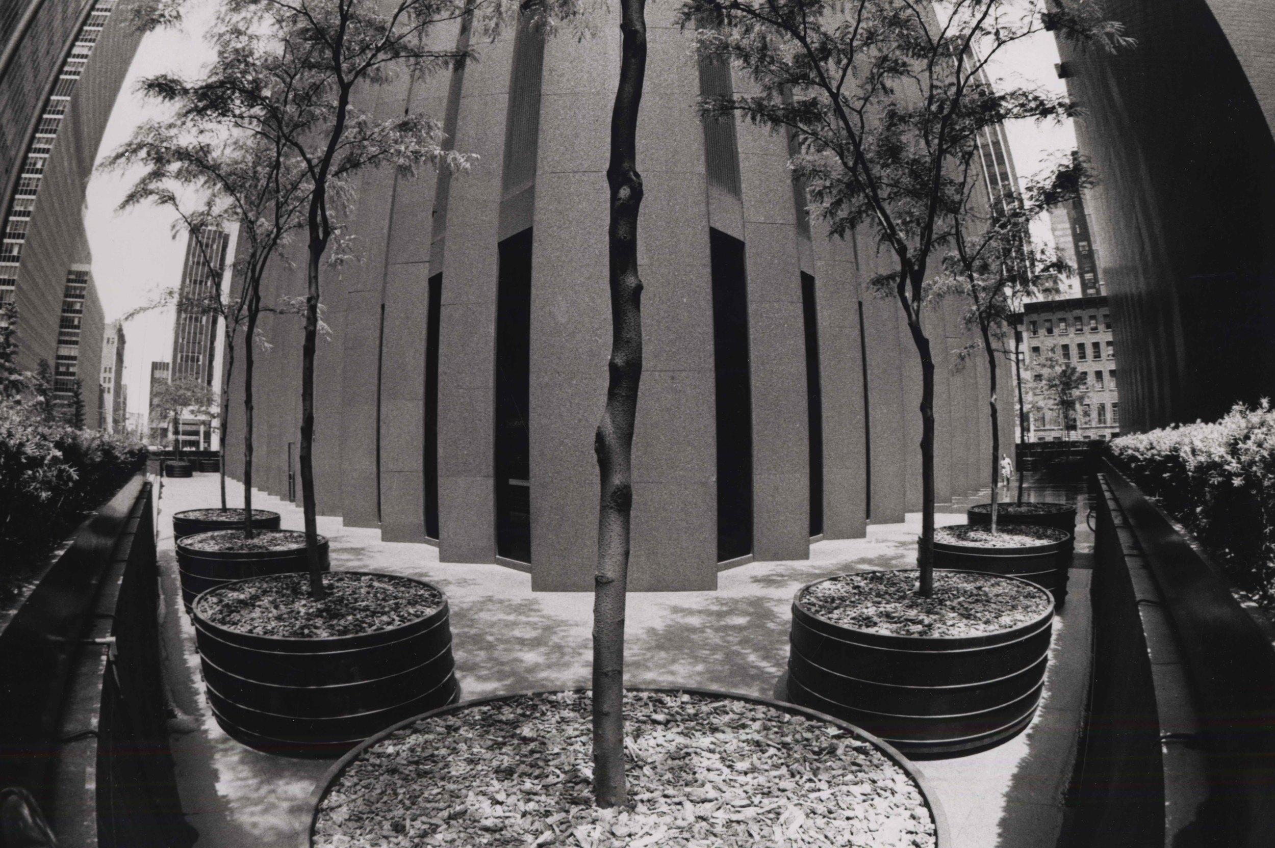 15_99_Tree planers against a building_Dan Wynn Archive.jpeg