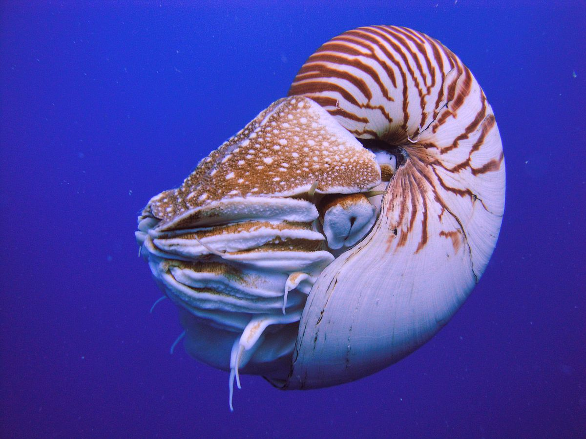 Children have looked at a picture of a nautilus and used their hands and bodies to create tentacles and big eyes staring out of a shell